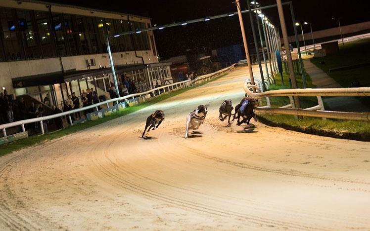 Group of greyhound dogs racing.